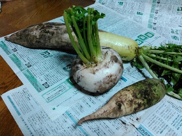 新鮮元気野菜たち