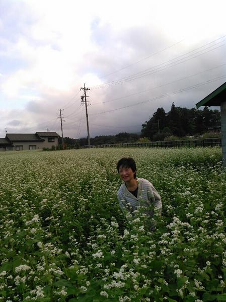 お蕎麦の花畑