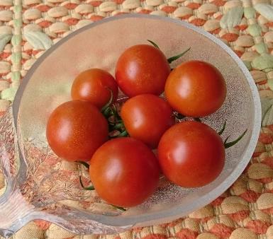 中玉ミニトマト中玉②