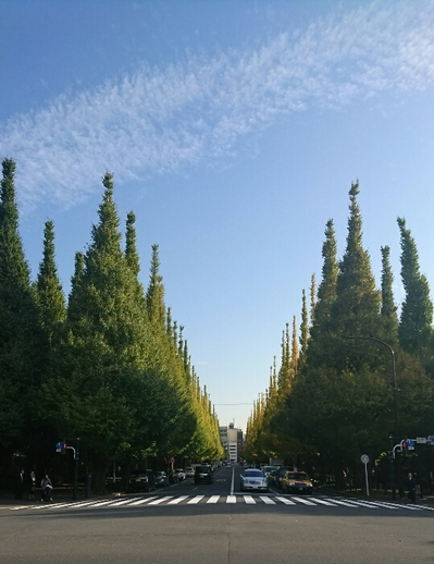神宮外苑(銀杏並木)